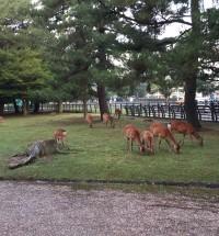 会場は奈良公園の中でした。人より鹿が多い⁉︎
